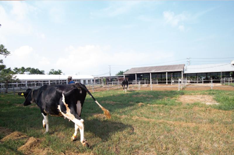 温暖な環境は豊かな酪農に向いている