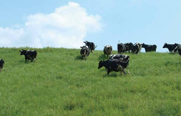 球磨酪農農業協同組合さん酪農イメージ